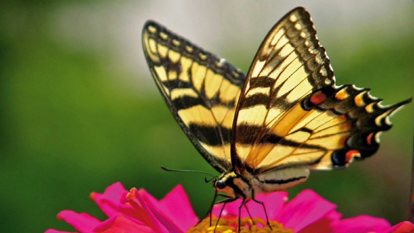 Butterflies Hold The Secret For Revolutionising Solar