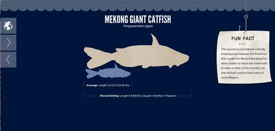 Mekong Giant Catfish measures up