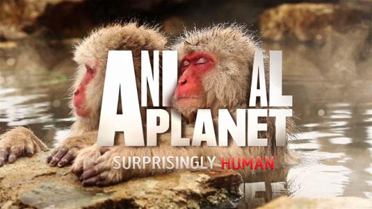 animal planet new brand