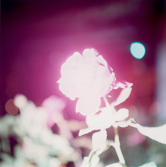 Untitled, from the series 'Illuminance' 2009 Copyright Rinko Kawauchi