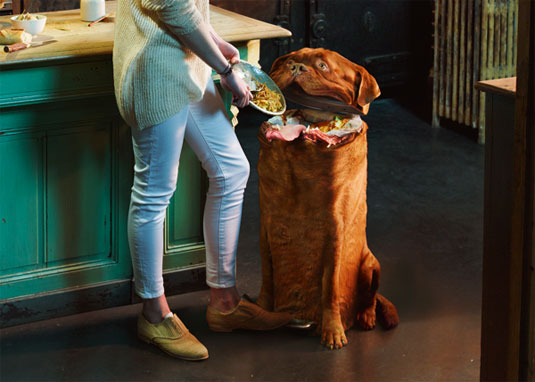 stop treating your dog like a trash can