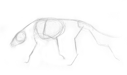 dog muscle 1
