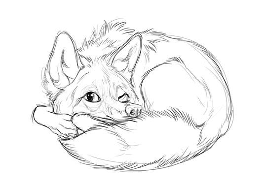 step 1 fox