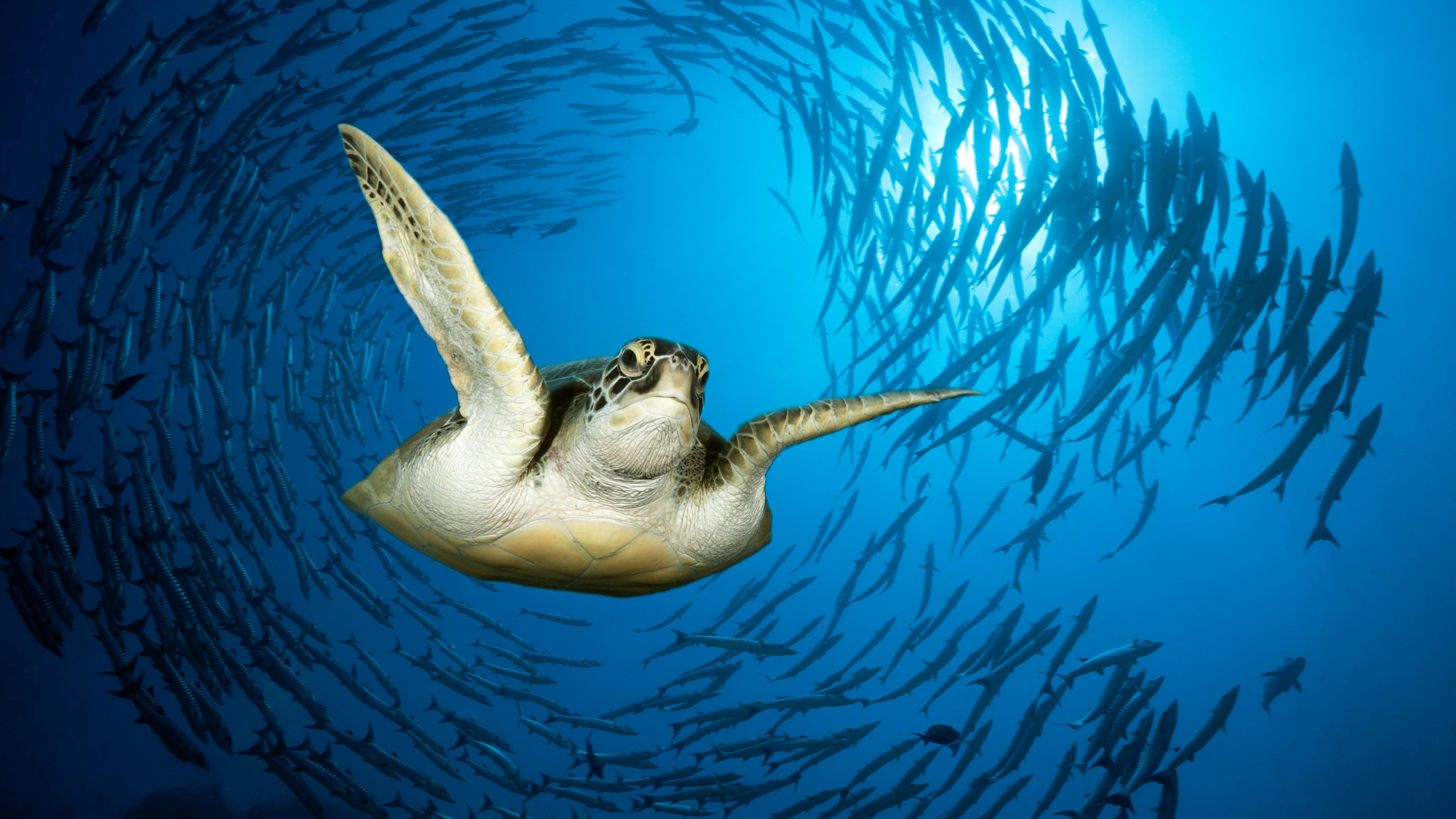 Sea creatures' unusual round swimming has scientists puzzled 8FQPtARsQRRR7jwKTPrXp4
