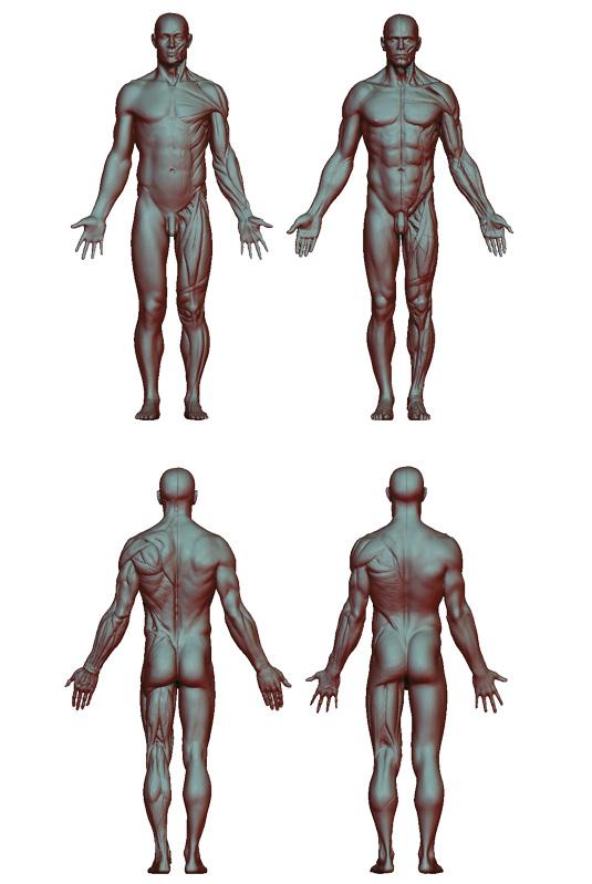 Top anatomy tips