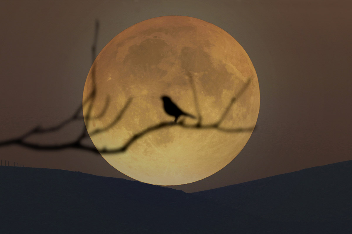 <p>March full moon 2021: Catch the big'Worm Moon' (and 1st'supermoon' of the year) on Sunday thumbnail