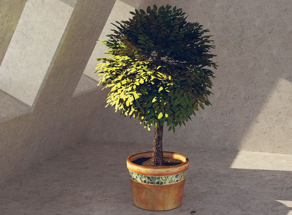 Cinema 4D tutorials: model plants