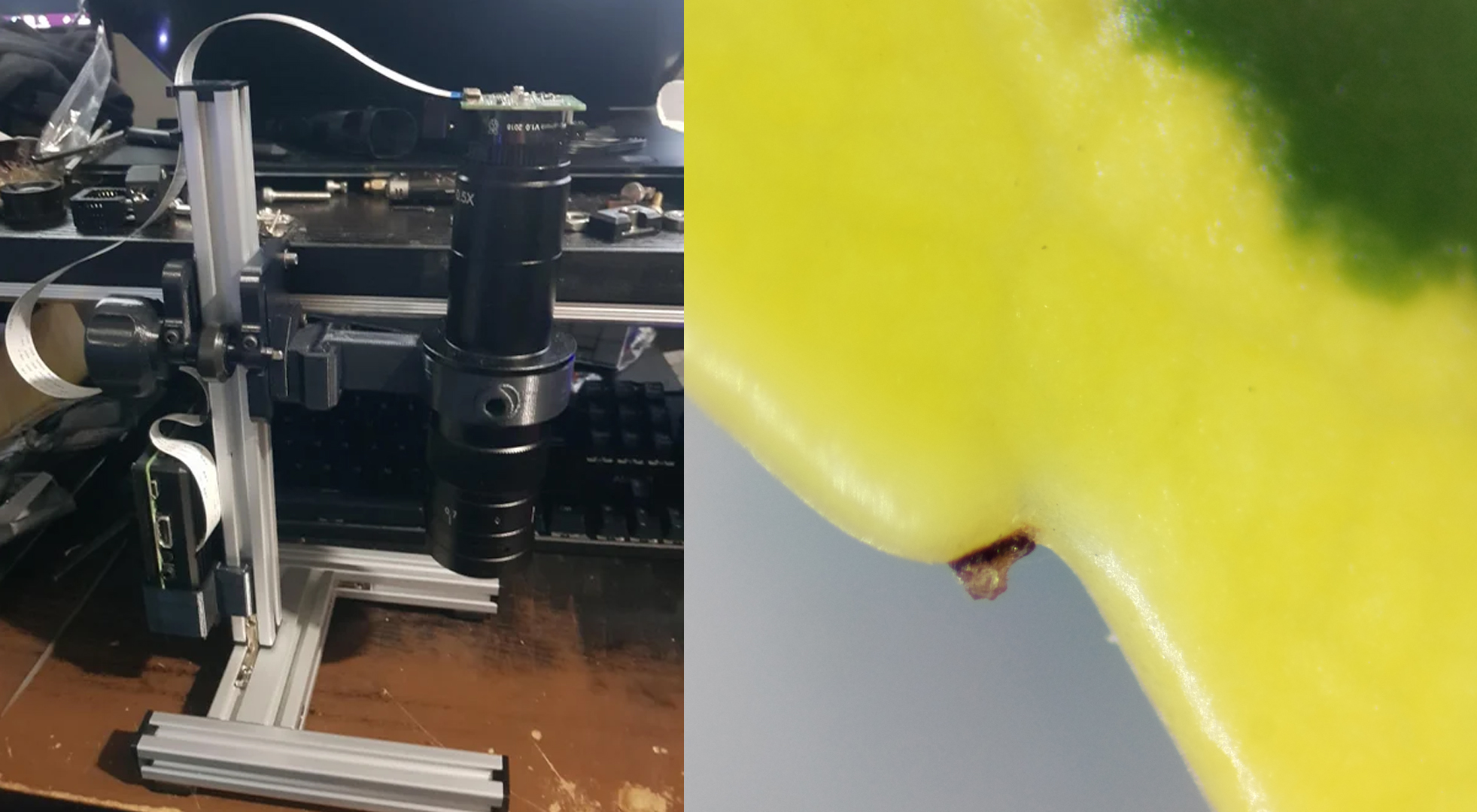 DIY Microscope Uses Raspberry Pi HQ Camera to Take Impressive Photos