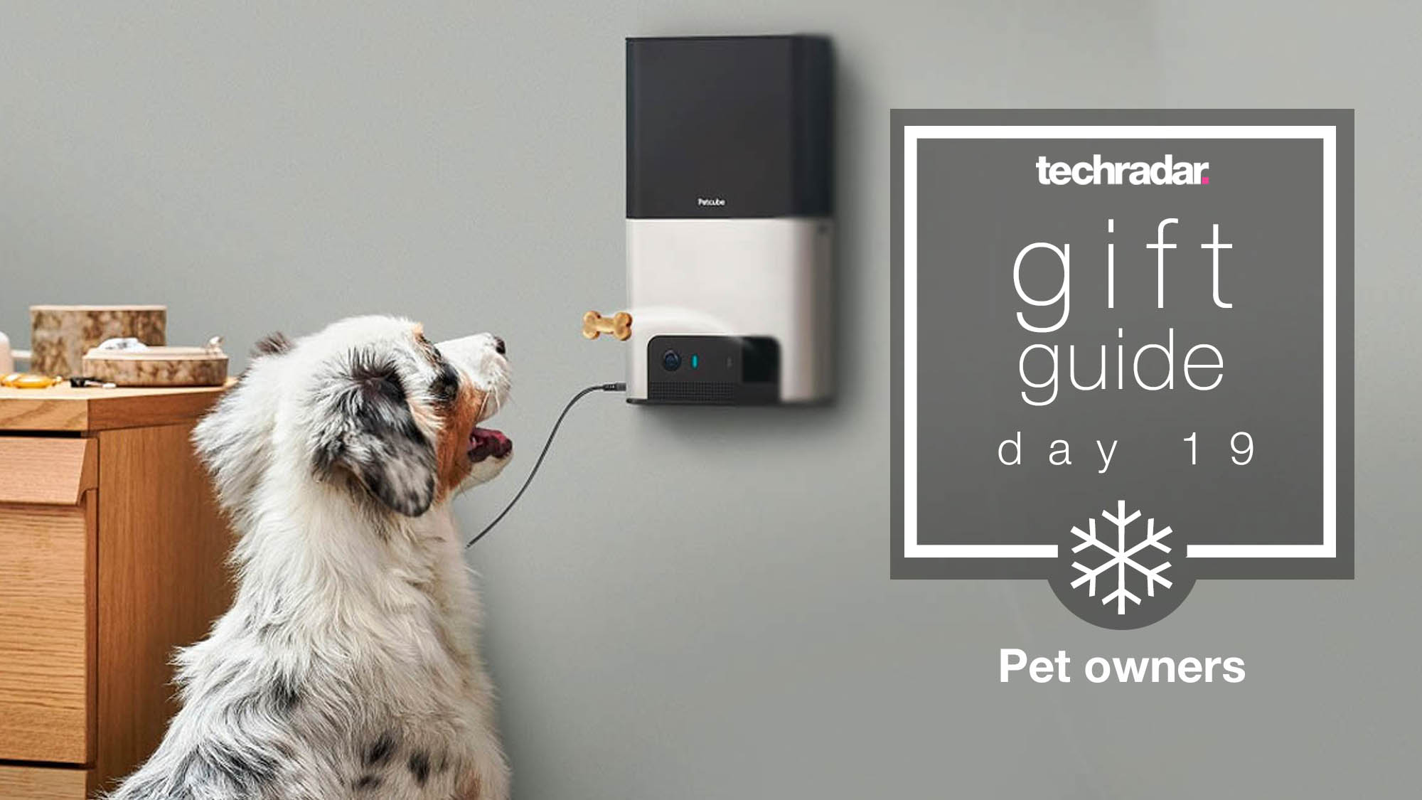 Top Christmas gifts for pet owners