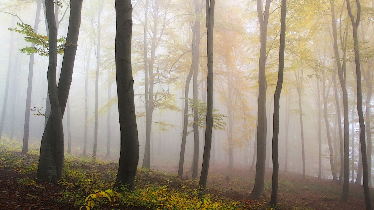 Step aside cloud computing, 'fog computing' is here