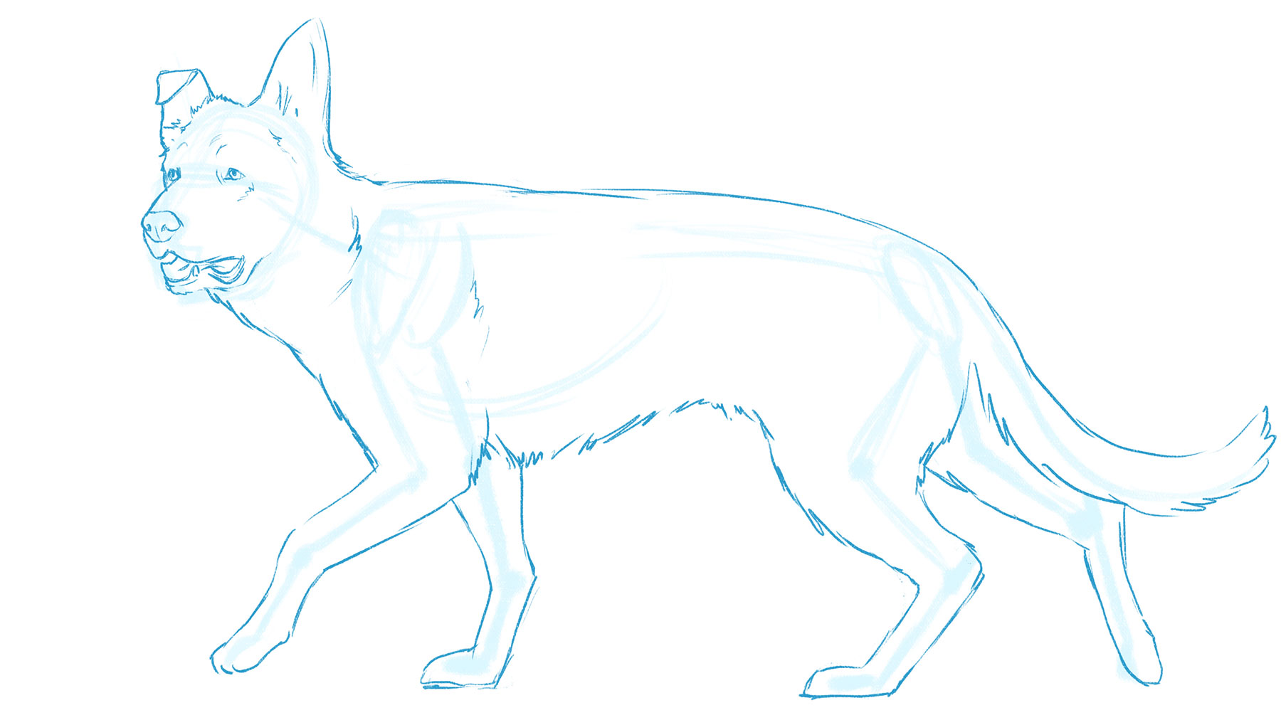 How to draw a dog: body