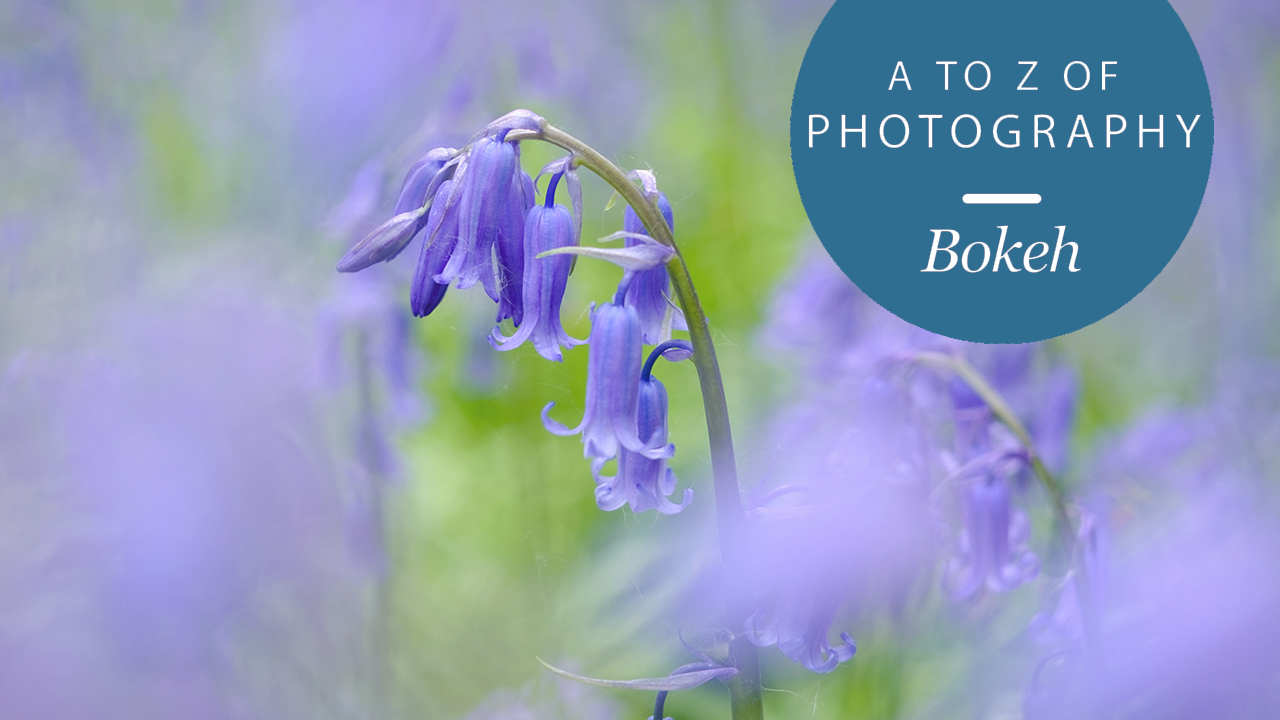 The A to Z of Photography: Bokeh