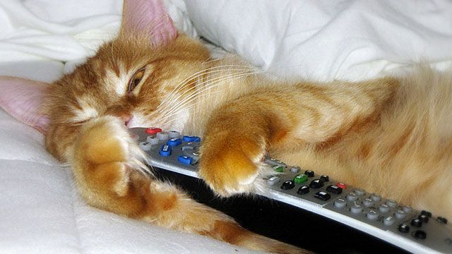 Use Your Cat as a Remote Control
