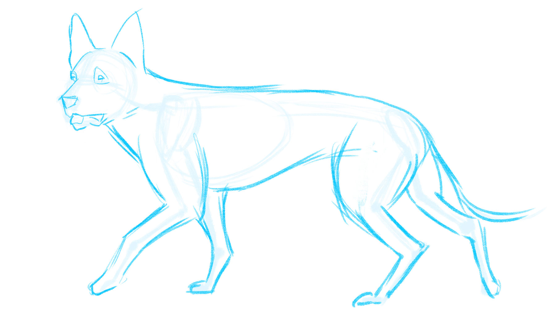 How to draw a dog: muscles