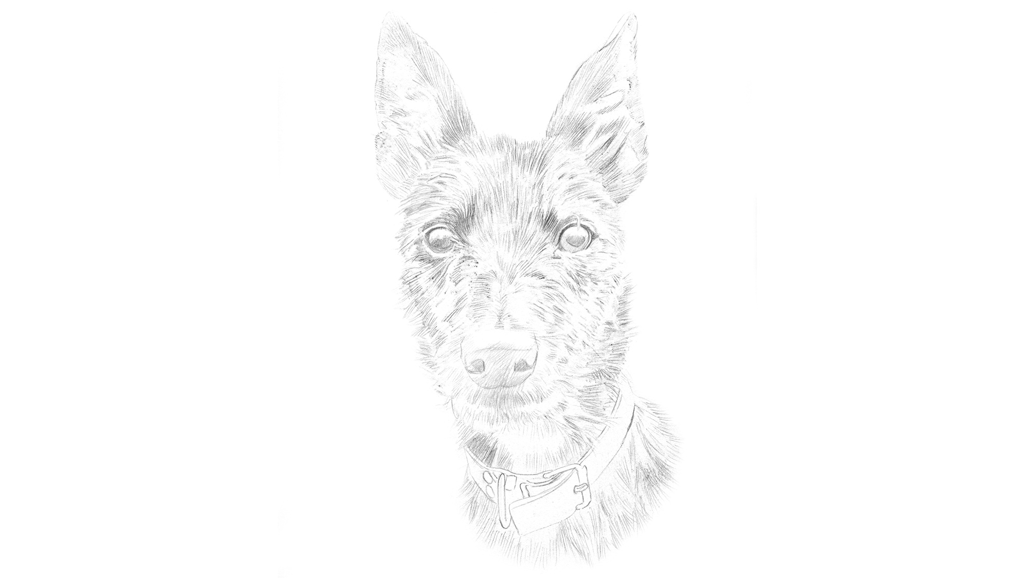 how to draw a dog portrait