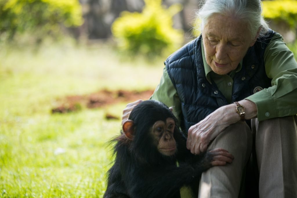 jane goodall says humanity's 'disrespect of the pure world' introduced on the pandemic Jane Goodall says humanity's 'disrespect of the pure world' introduced on the pandemic VYutrqgzBTL5yGrmSoL7cj