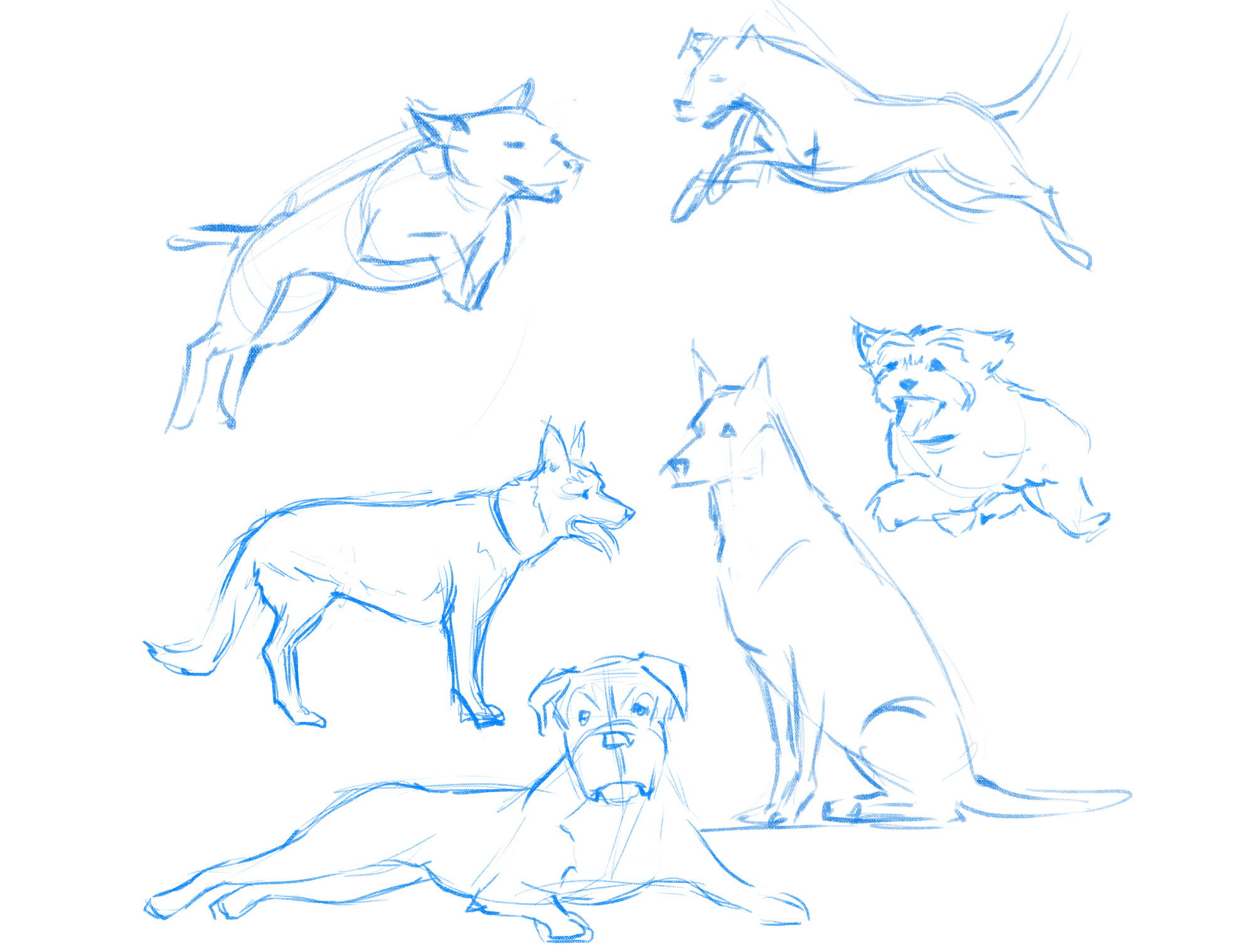 How to draw a dog: sketches