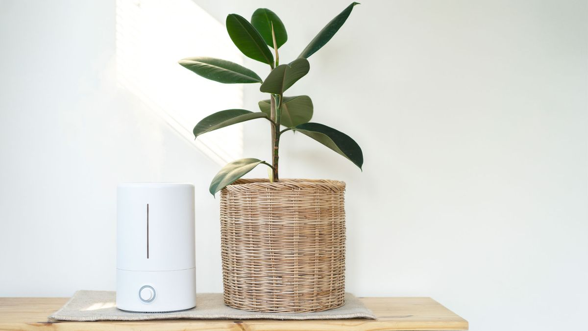 Do air purifiers help with bad smells?
