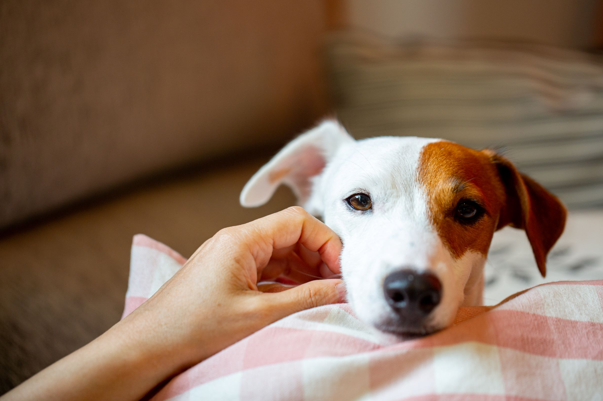 new coronavirus discovered, and it jumped from canines to individuals New coronavirus discovered, and it is being Transmitted from Canines to Humans WdhrVa7WpPrD8BRh7oAwCD