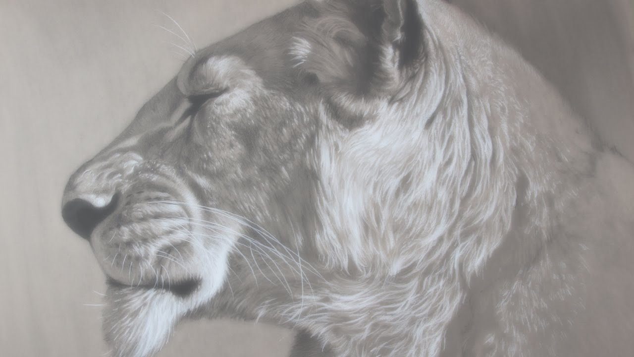 Monochrome drawing of lion
