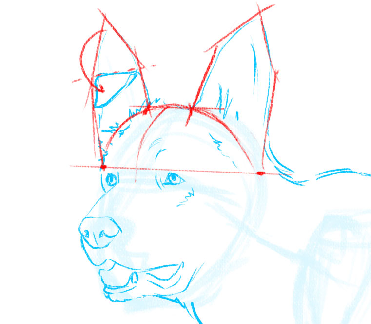 How to draw a dog: ears