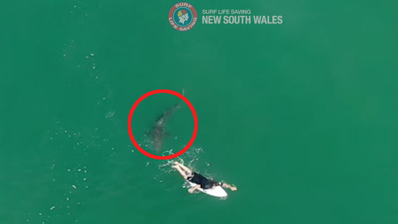 Drone warns surfer of very close encounter with 5-foot shark in Australia thumbnail