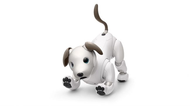 A picture of Sony Aibo, a robot dog
