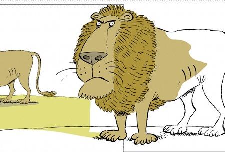 colour lion import