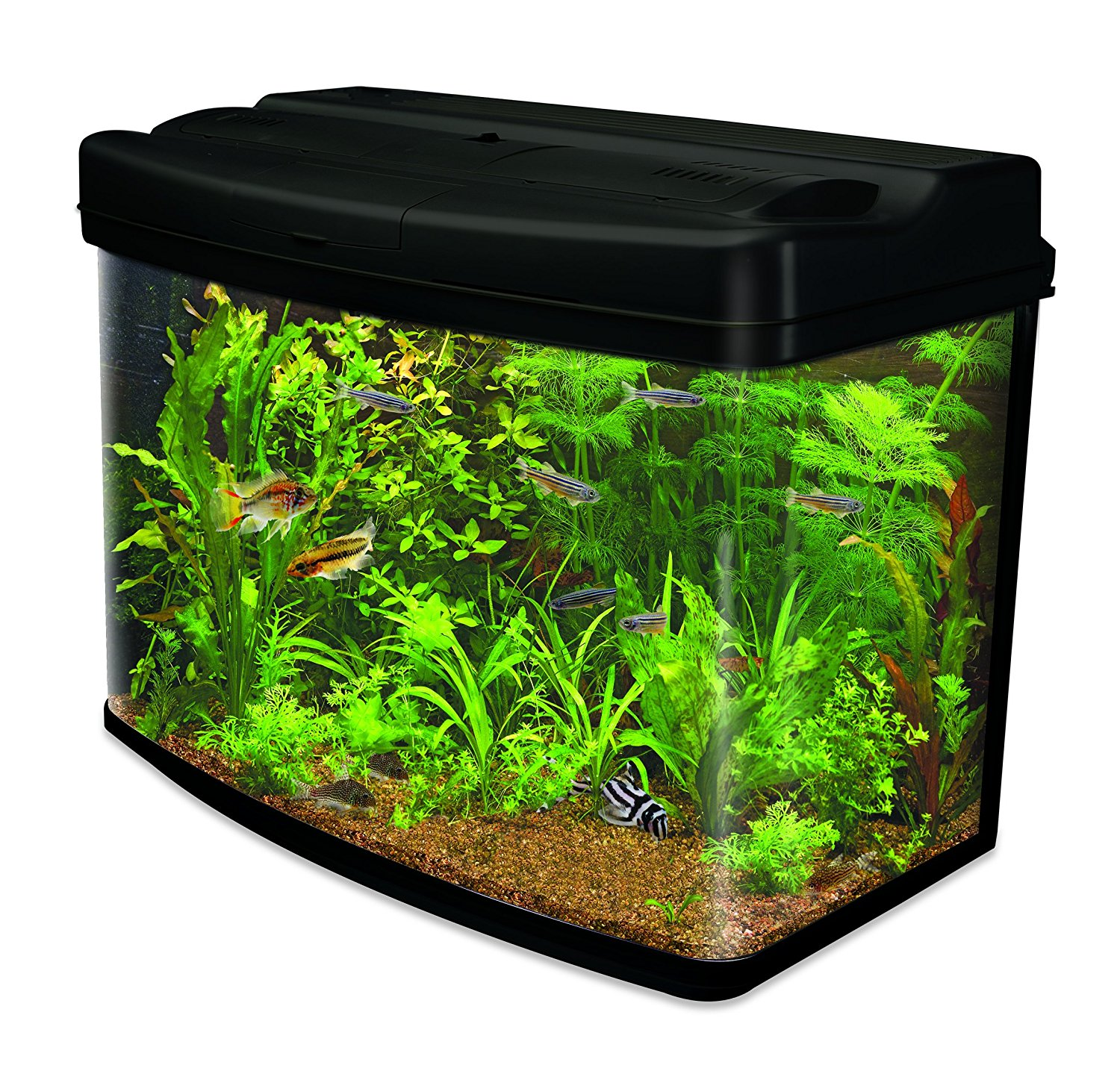 Amazon prime day daily deals technology fearless for Amazon fish tanks for sale