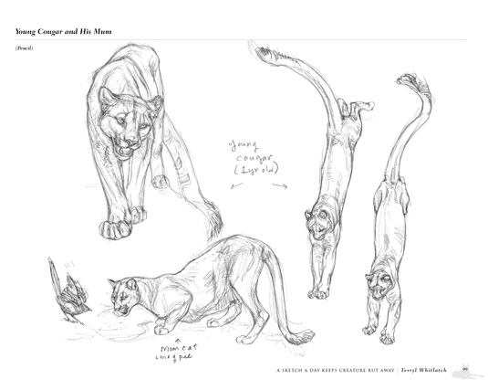 Principles of Creature Design Review: a sketch a day