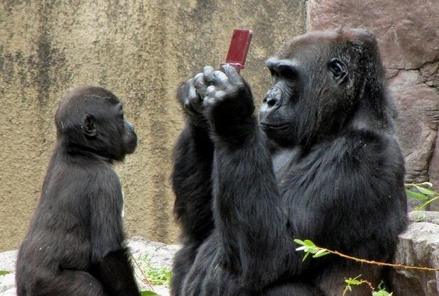 Gorilla Playing - image 2