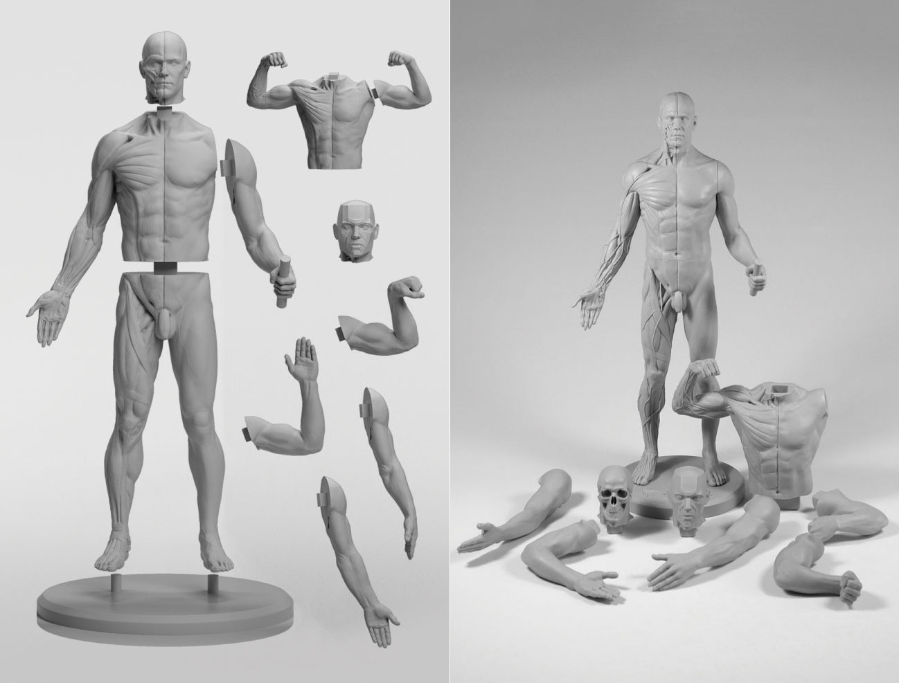 Adaptable male figure: review - Graphic Design | Digital