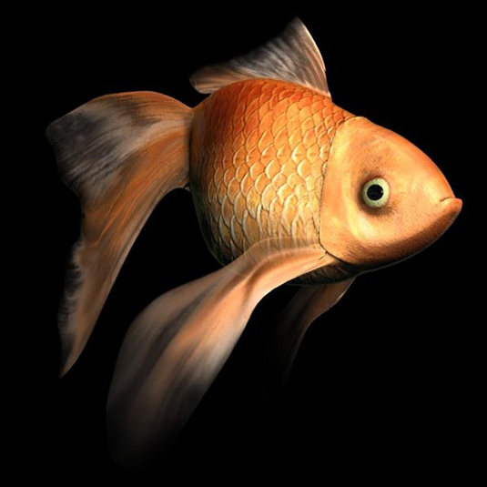 Free 3D models - Goldfish