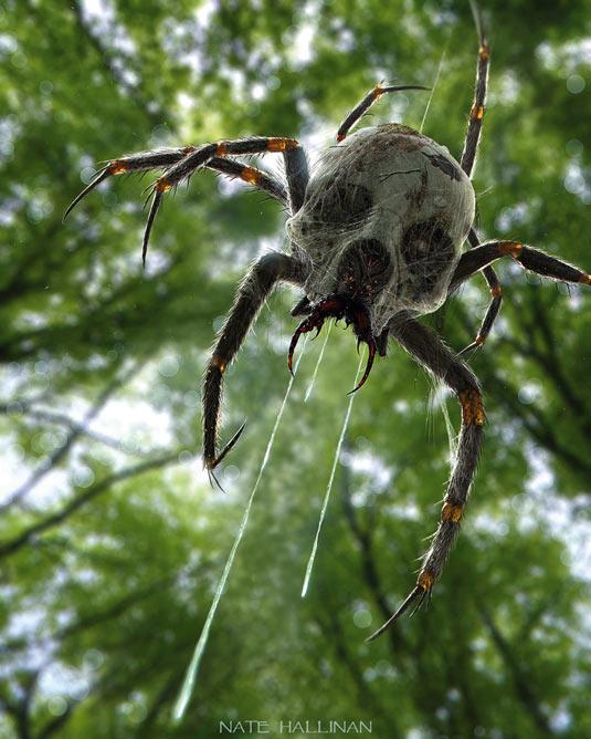 tobias kwan spider