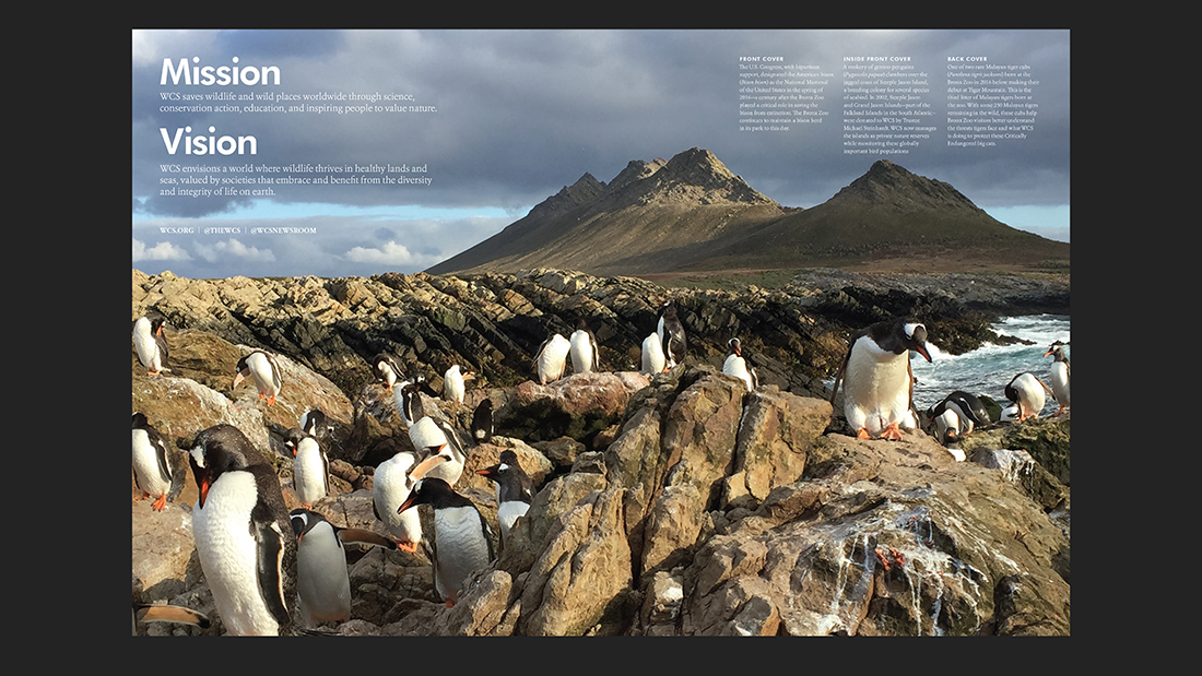 Annual report with double-page penguin photo