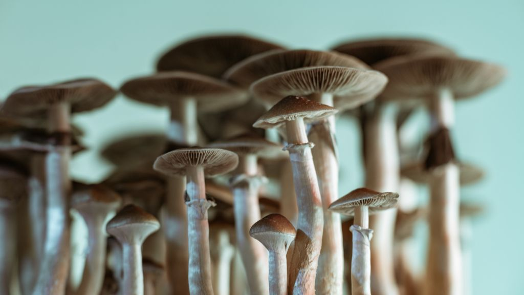 'Magic mushrooms' grow in man's blood after injection with shroom tea