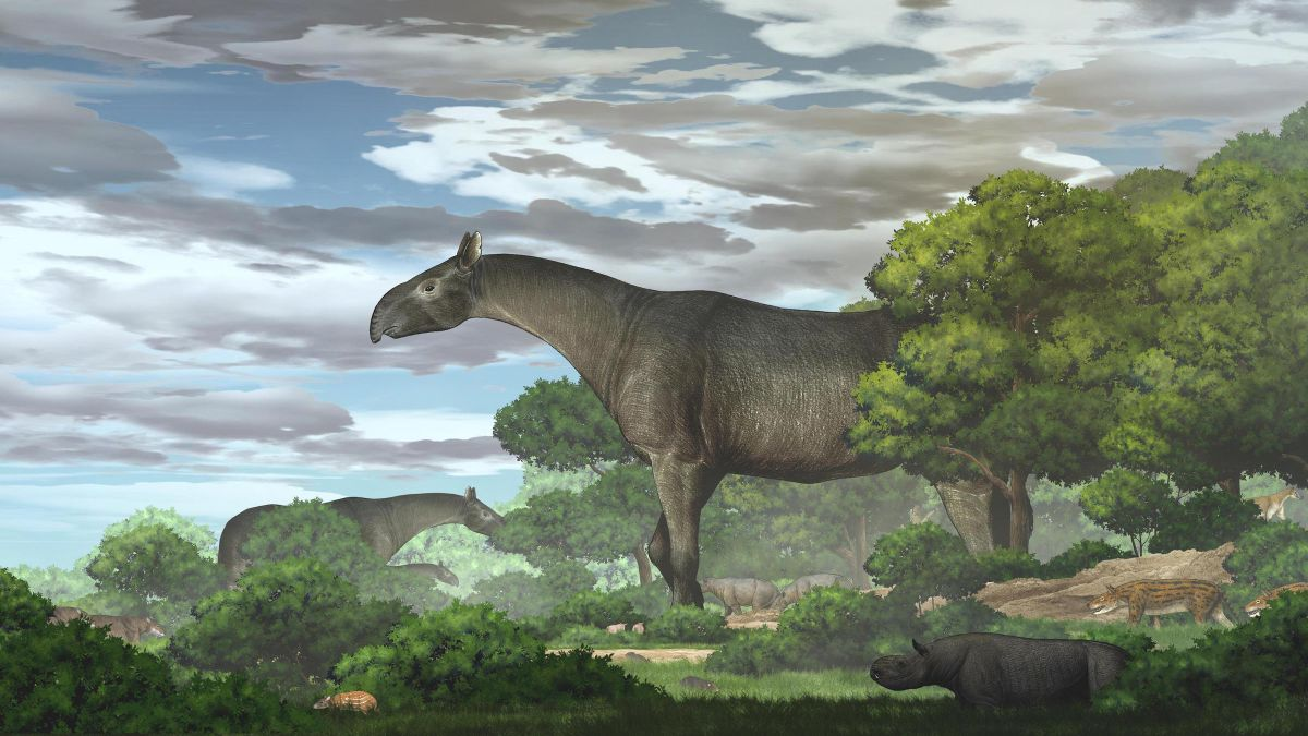 Ancient giant rhino was one of the largest mammals ever to walk Earth