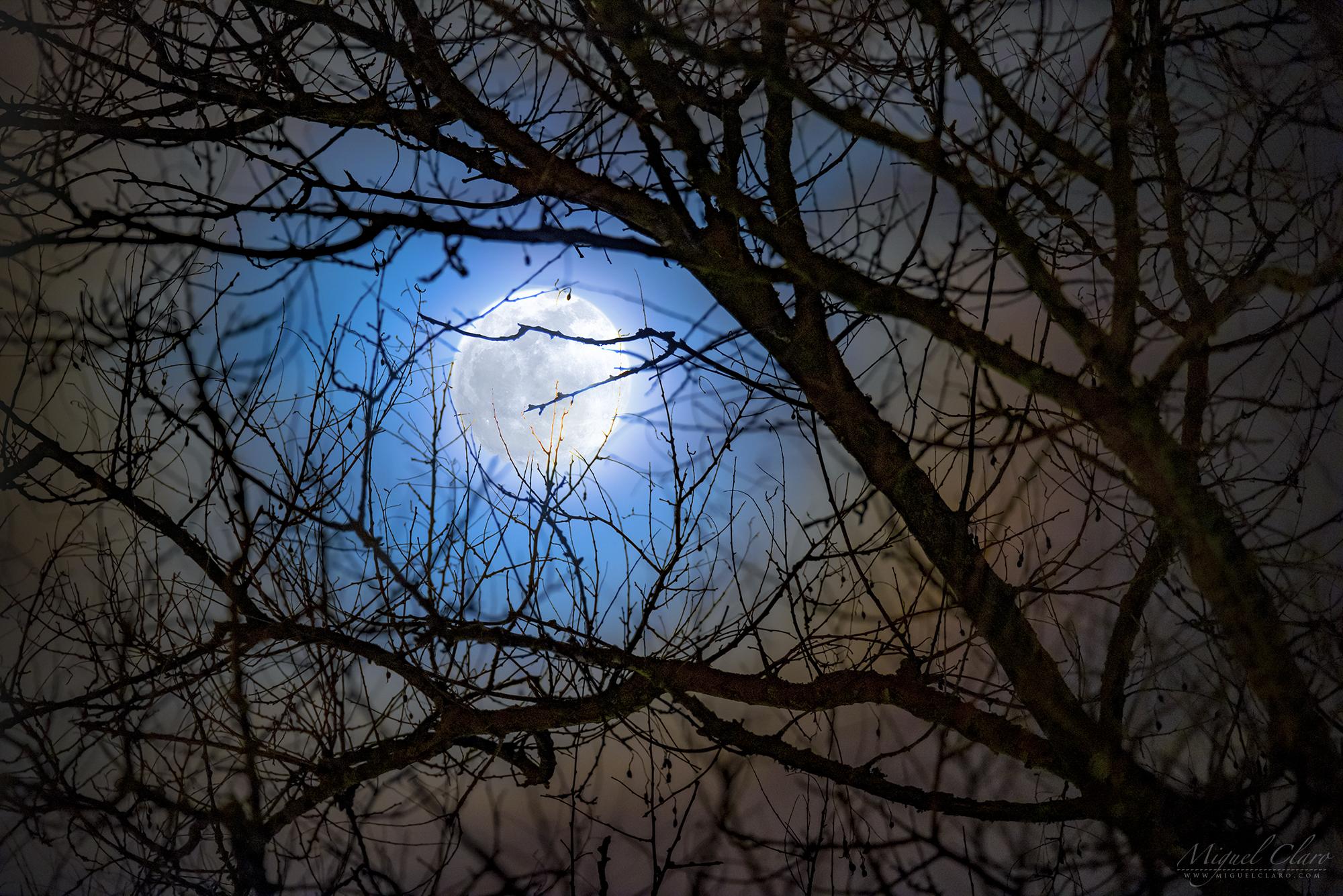 Blue 'Lunar Corona' Frames the Full Moon in Eerie Night-Sky Photo