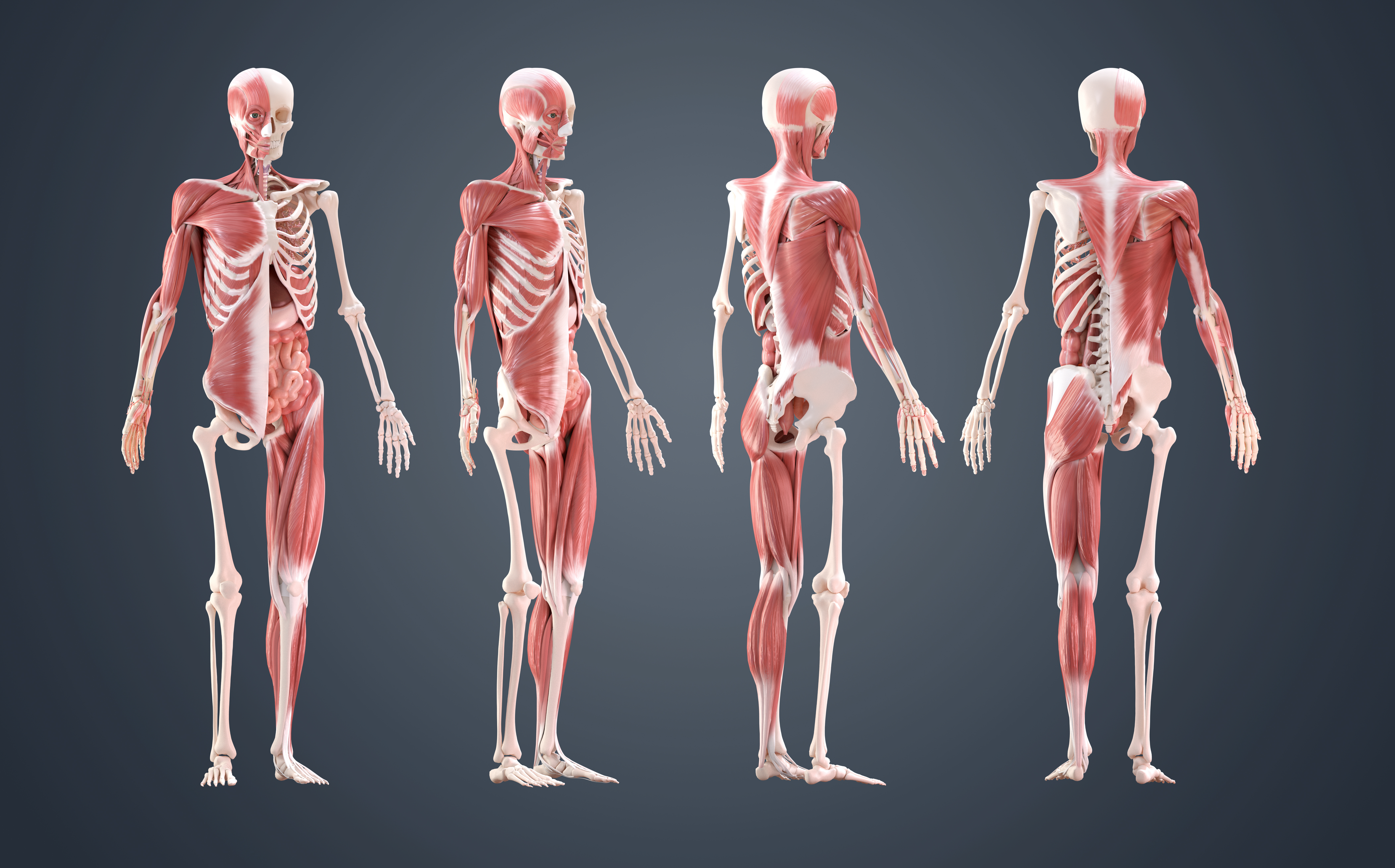 10 Ways To Improve Your Human Anatomy Modelling Creative Bloq