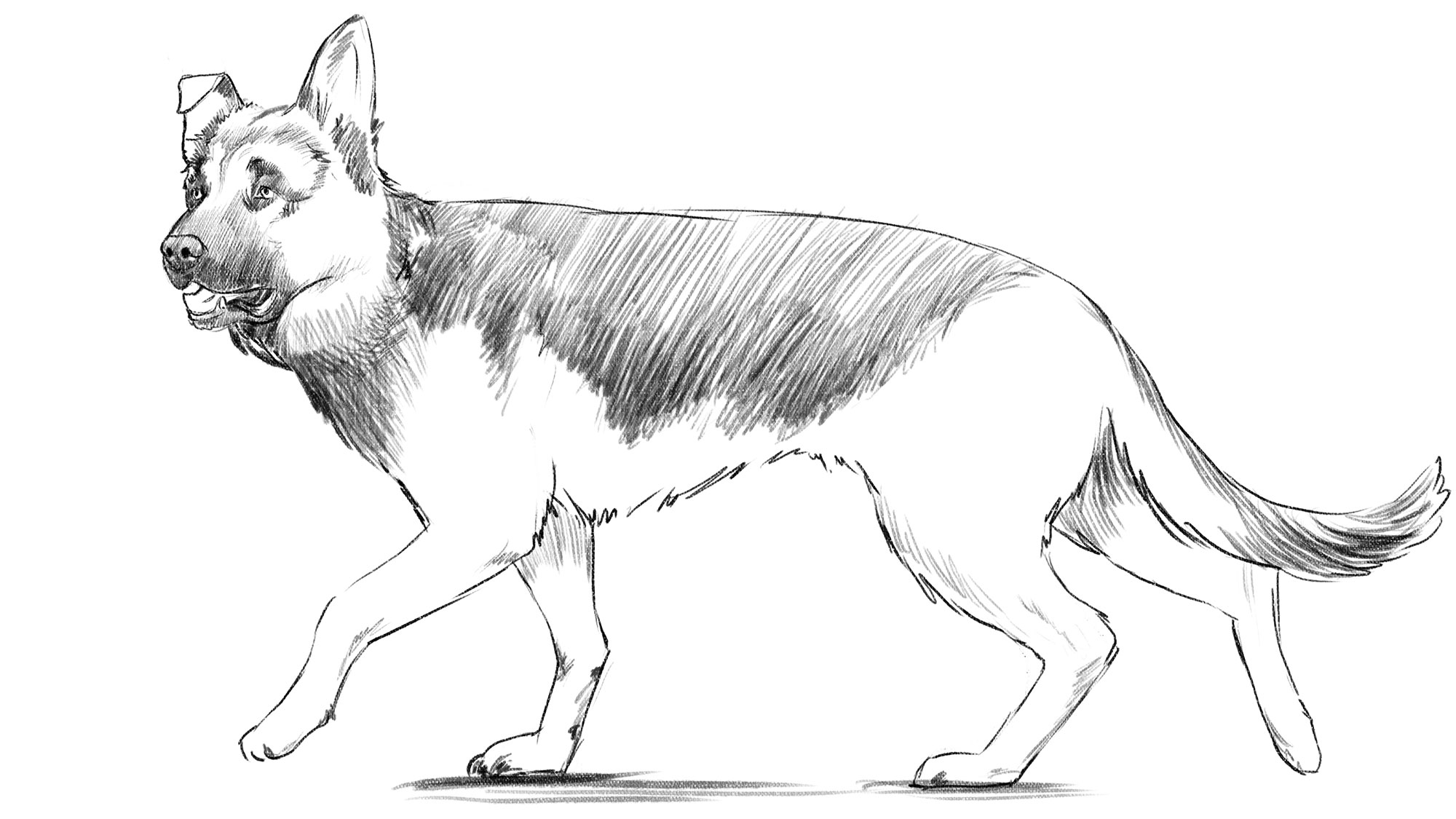 How to draw a dog: final touches