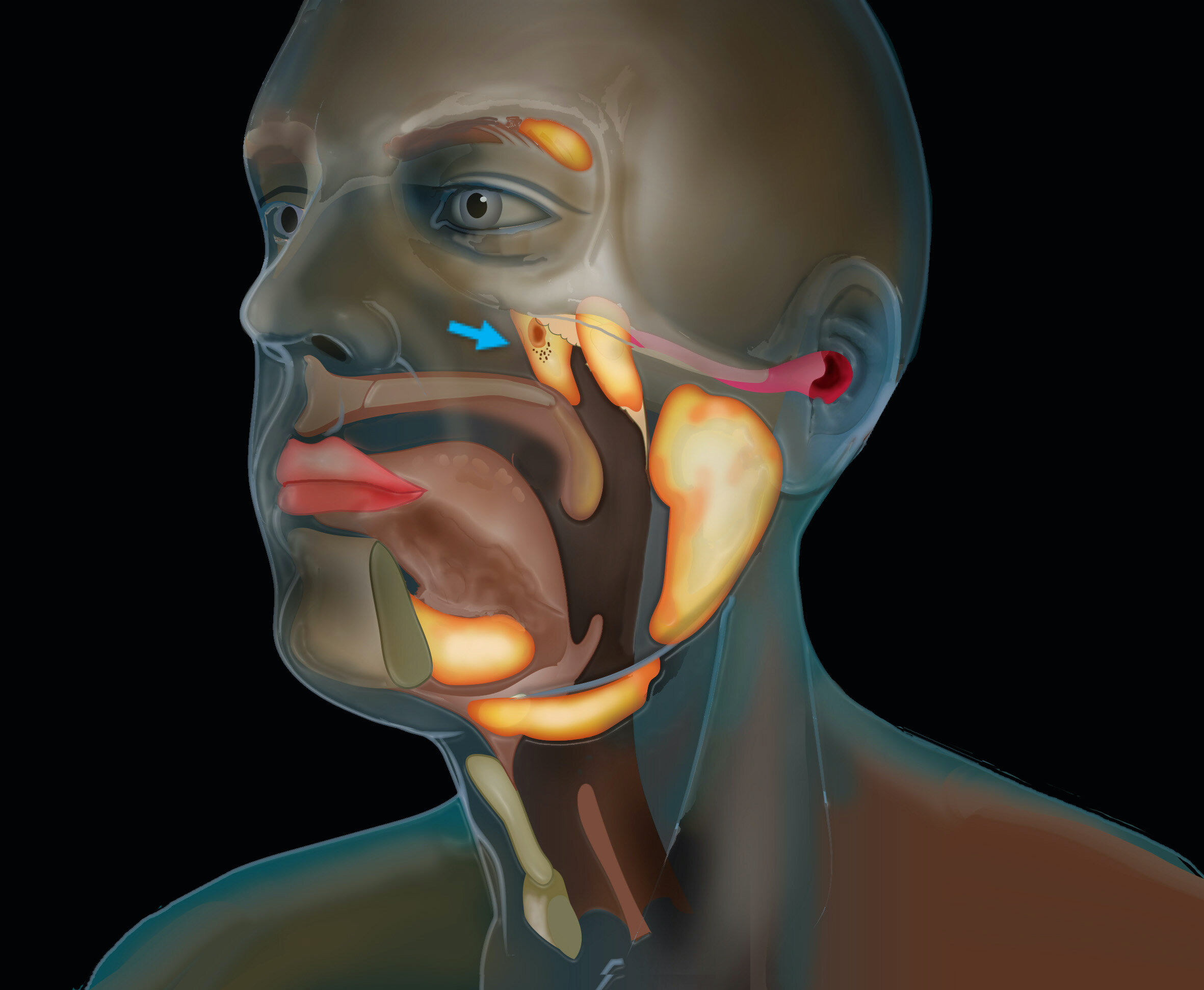 Scientists discover new organ in the throat