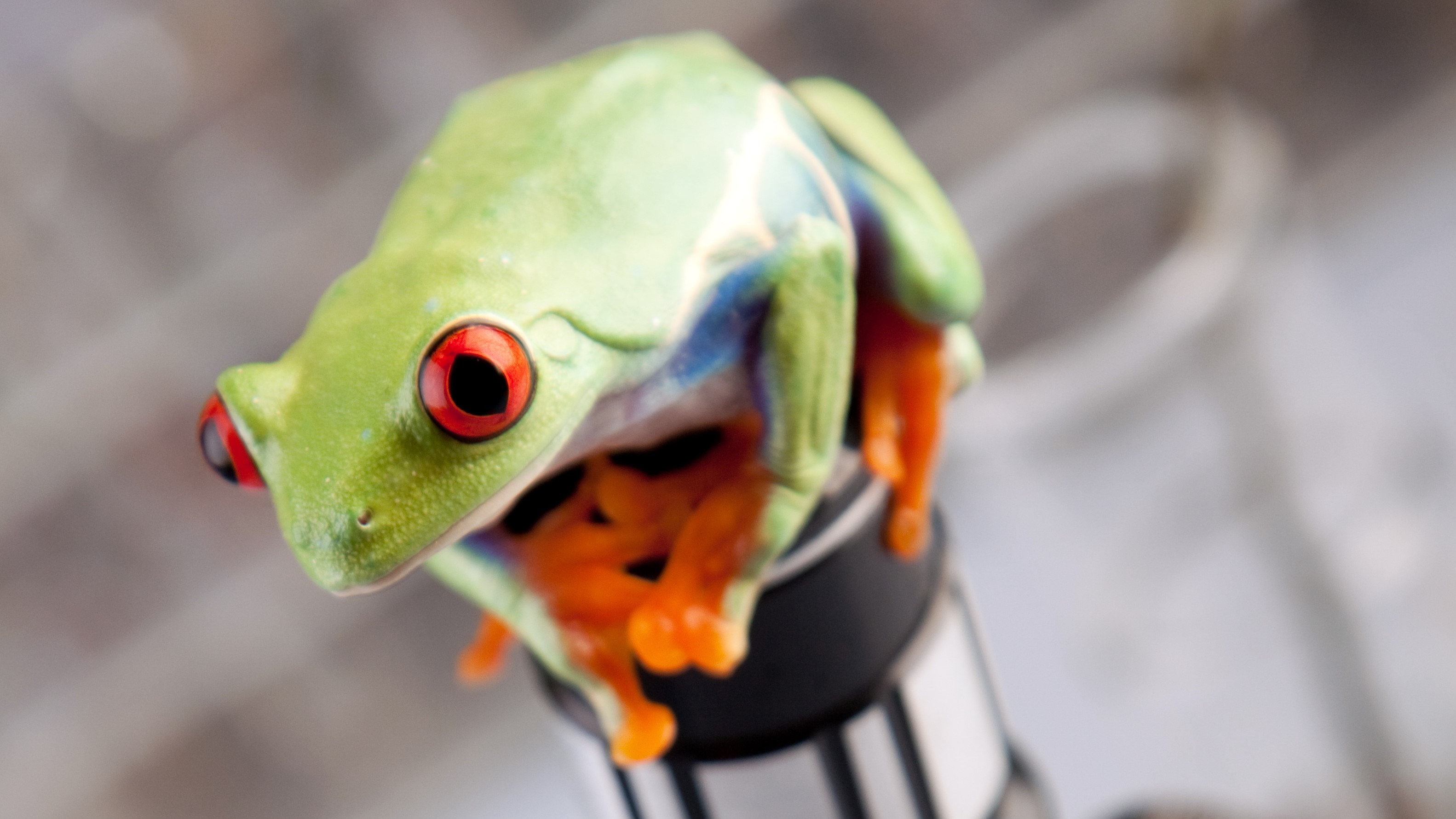 Researchers build 'living robots' using cells scraped from frogs