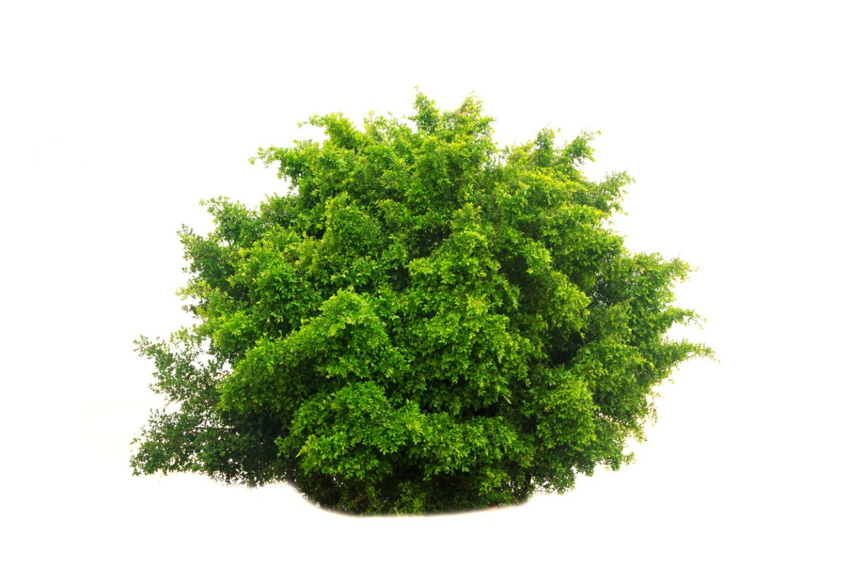 You can turn into a bush in Fortnite Battle Royale now ...