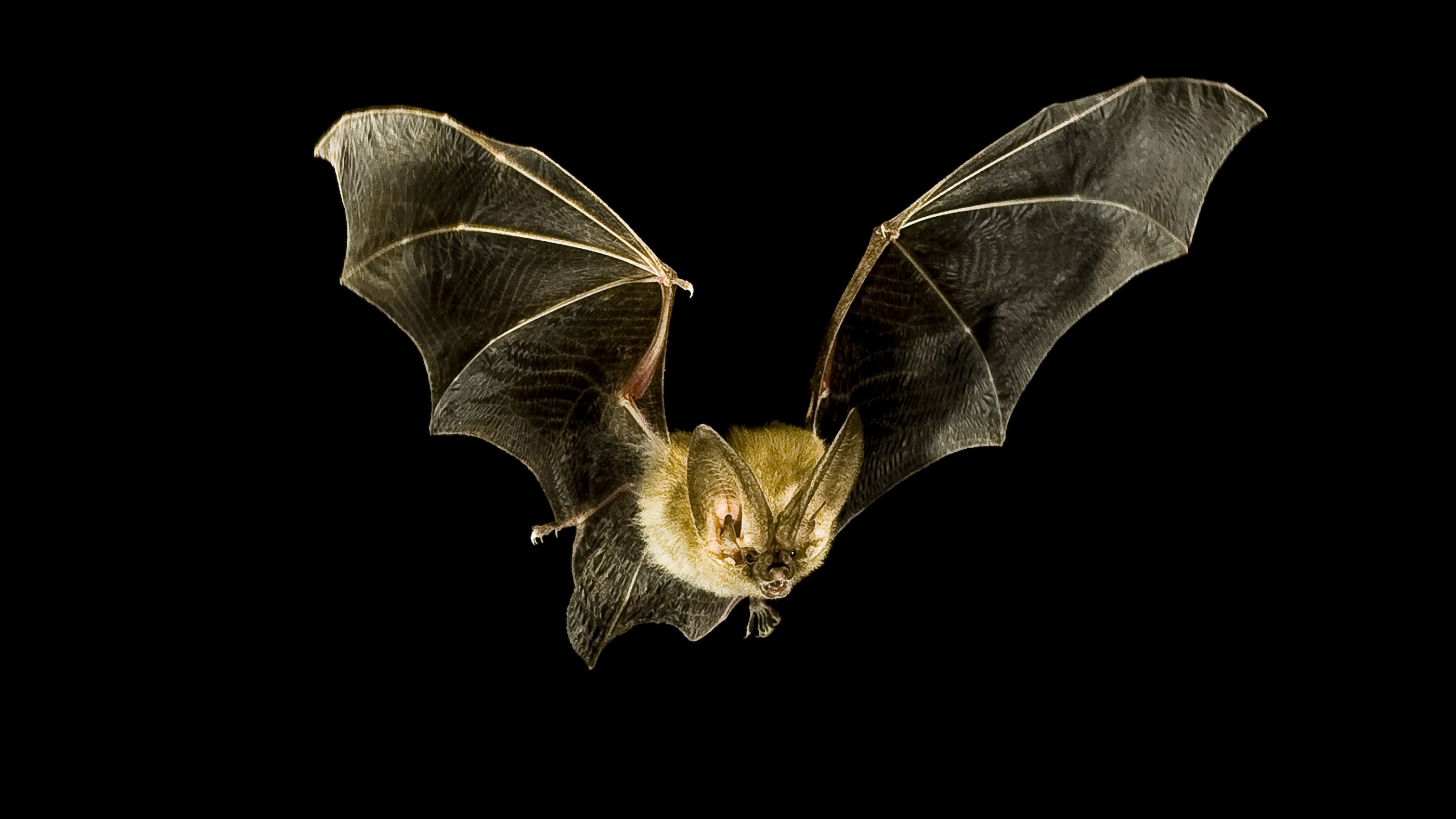 Bats are superheroes of the evening. Their superpowers may assist us shield them. xZhHVkMvKwgDtu8hcBPPsE
