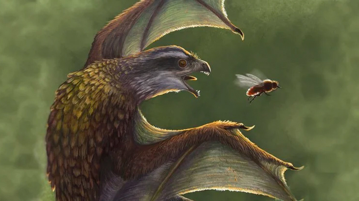 These tiny, little-winged dinosaurs were probably worse at flying than chickens