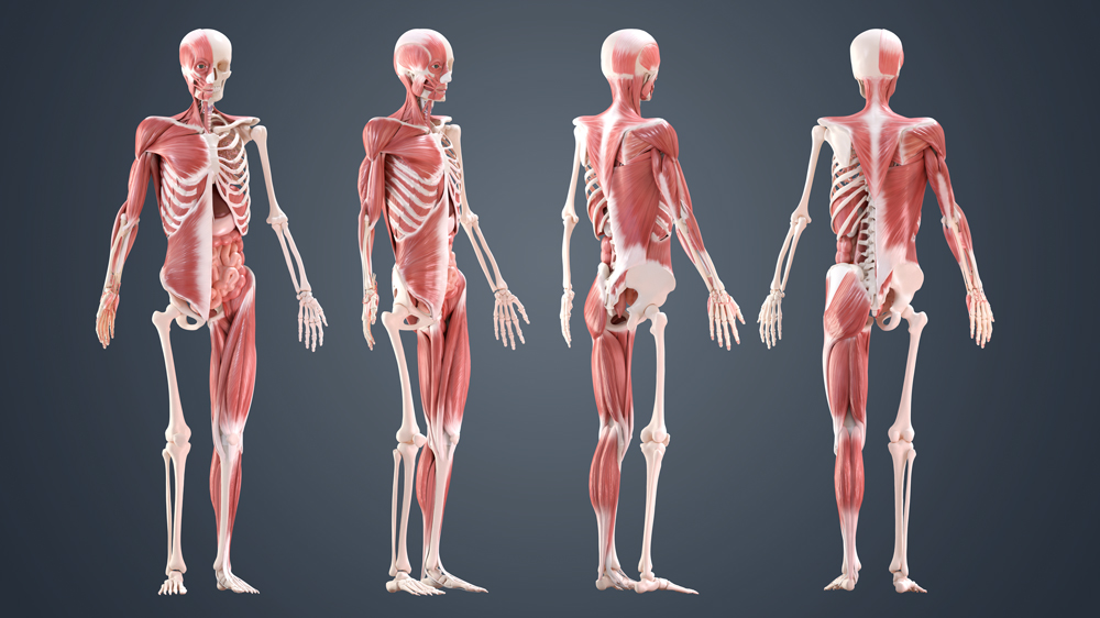 10 ways to improve your human anatomy modelling