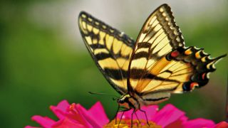Butterflies could hold the key to supercharging solar power