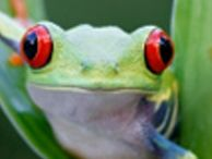 A frog, which could be viewed in high definition, wirelessly