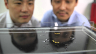This robotic insect can jump on water