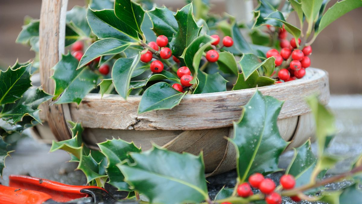 5 of the best plants with winter berries
